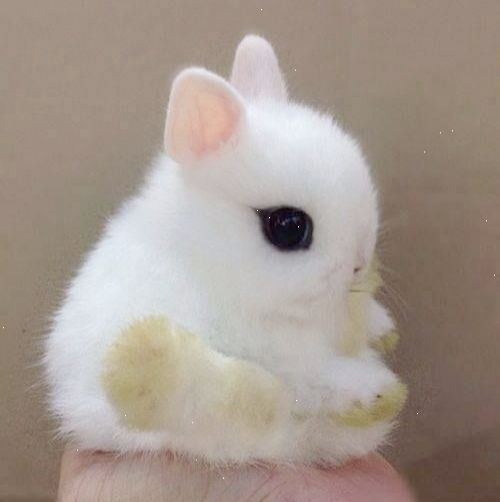 Amazing Kittens For Sale Near Me Valuable Cute Baby Bunnies Cute Animals Cute Animal Pictures