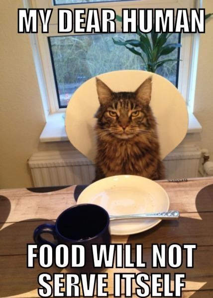 What Maine Coons say at suppertime.