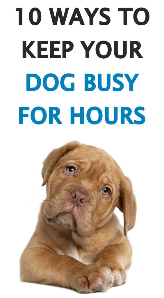 How To Keep Your Dog Busy Indoors For Hours New Puppy Puppies Dog Entertainment