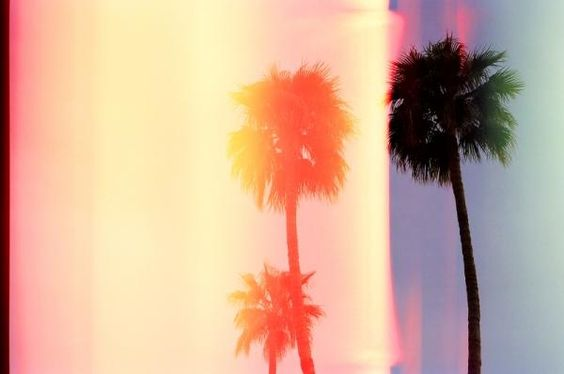 Overexposed palms