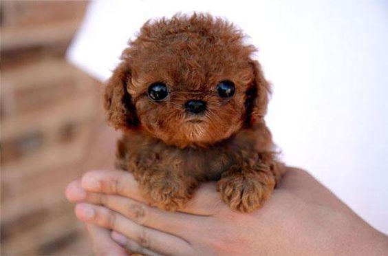 cachorro tierno