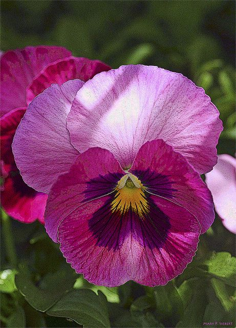 I pinned a pansy because that is the necklace Park gives Eleanor for Christmas.