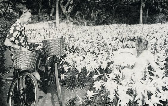 Easter Lilies of Yesteryear - The Bermudian