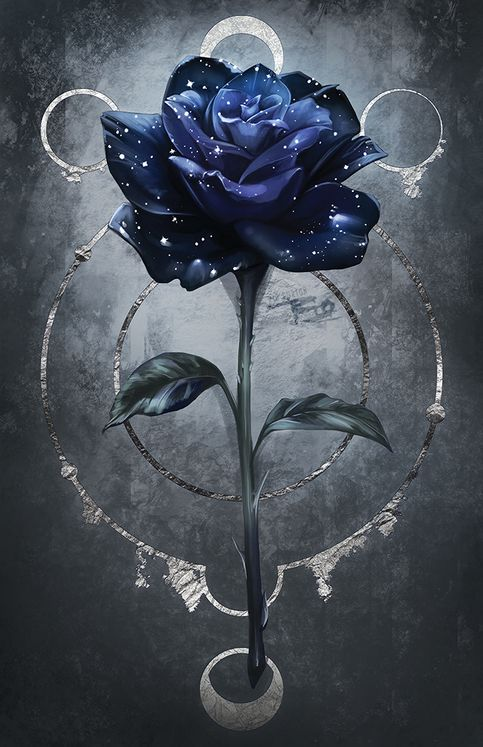 Large Moon Rose Blue Roses Wallpaper Rose Art Rose Wallpaper