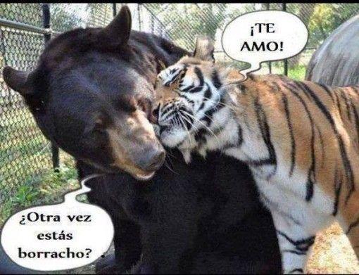 Memes De Borrachos Los Mejores Memes En Espanol Cute Animal Photos Animals Animal Photo