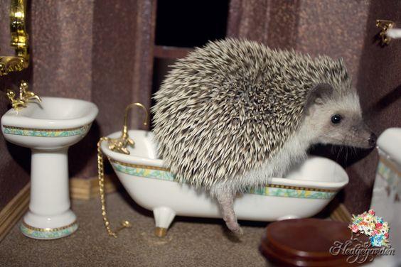 "#hedgehog #dollhouse #cute #funny ""Ekkkkk! Privacy Please!"":"