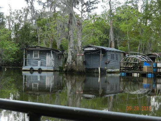Acadian Swamp Tour Baton Rouge