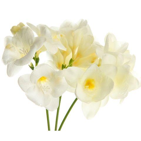 Freesia White Buy Online In San Diego Flower Shop Freesia Flowers Flowers Flower Bouquet Wedding