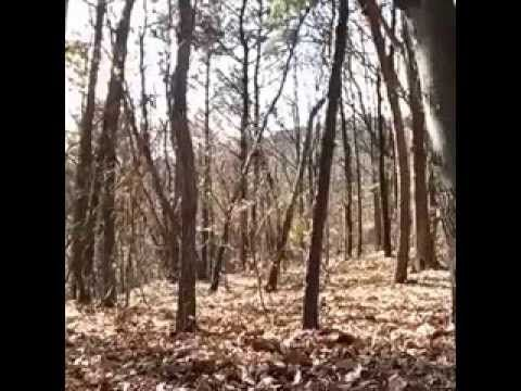 Geister im Wald (Achtung Gruselig)