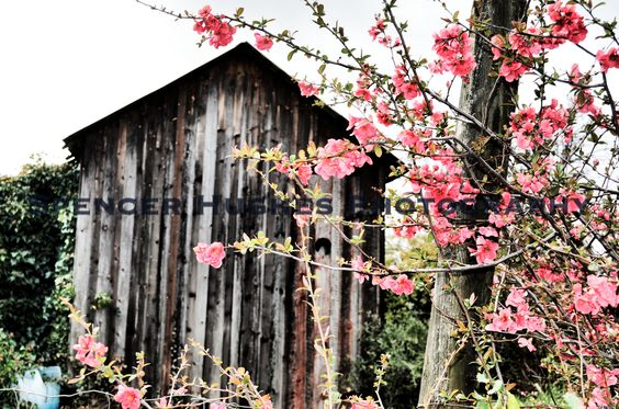 This was taken in a small town on our drive back from Yosemite. QUINCE DREAMS is from my Rustic & Rugged Collection.
