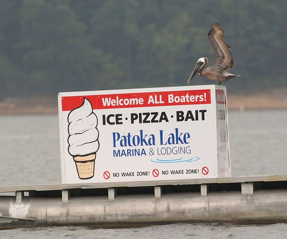 Brown Pelican on Patoka Lake in Southern Indiana