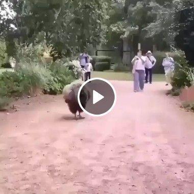 Filhote de urubu gigante tomando sorvete