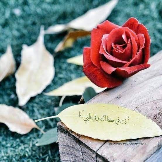 وبعيدا عن أن نلتقي أو لا نلتقي أنت في حفظ الرحمن وفي قلبي أنا اللهم احفظ لنا أحبابنا أينما كانوا وأينما حلوا Iphone Wallpaper Flowers Rose