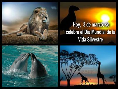La Asamblea General de las Naciones Unidas proclama el 3 de marzo como el día mundial de la vida silvestre