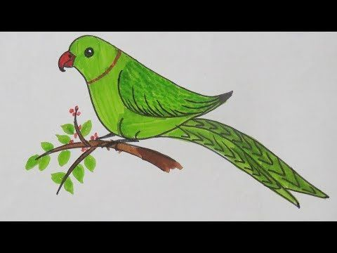 How To Draw Smiling Parrot Simple Nature Drawing Very Easy Step Of Drawing For Kids Youtube Simple Nature Drawing Parrot Drawing Nature Drawing
