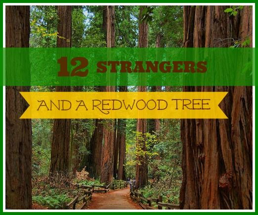 12 Strangers And A Redwood Tree Why We Should Overcome Obstacles As Moms To Fellowship In Community!
