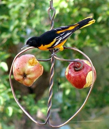 Whole fruit to feed birds.   Use a pair of pliers and make a hanger