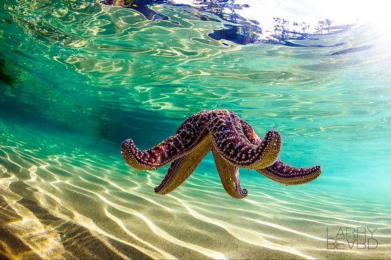 Water Worlds Photo Contest Finalists #photographytalk #starfish