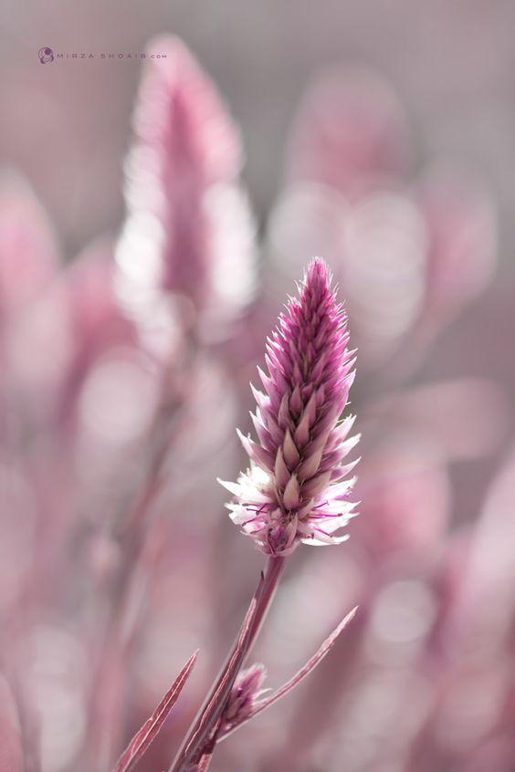 pink grassy plants