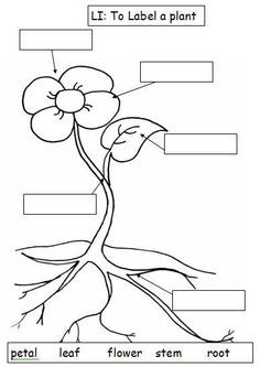 Black And White Plant Parts Diagram Sketch Coloring Page