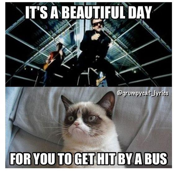 Grumpy Cat sings It's A Beautiful Day by U2