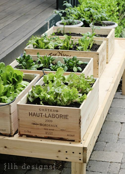 Short on Growing Space? Want a Neatly Organized Container Garden? Use Empty Wooden Crates as Planter Boxes. Brilliant & lovely. via LLH Designs - maybe tiered near the garage