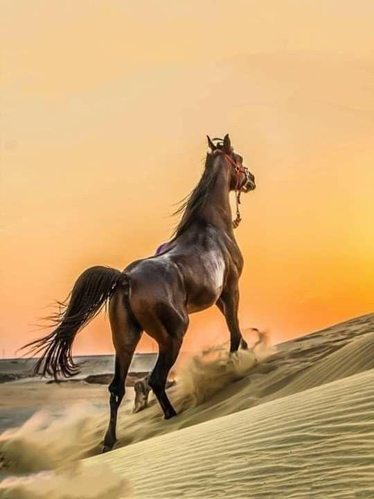 Pin By Tamae Inoue On Farm Or Ranch Animal Kingdom Beautiful Horses Horses Horse Anatomy