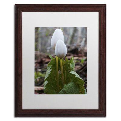 Trademark Art 'Bloodroot Wildflower' by Kurt Shaffer Framed Photographic Print Size: