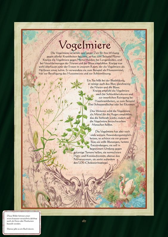 http://www.kraeuter-verzeichnis.de/BuchBilder/187.jpg