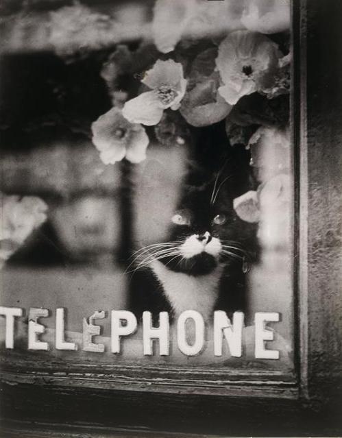 Colette's cat, 1938
