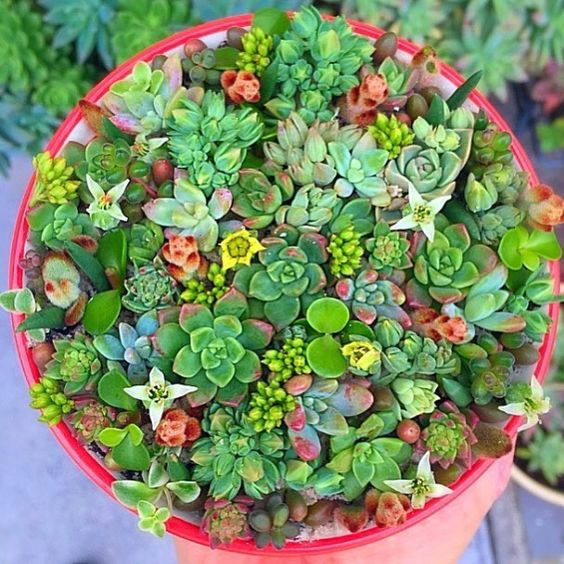 That's a full bowl  by @zeety  #thesucculentsource #succulents #succulent
