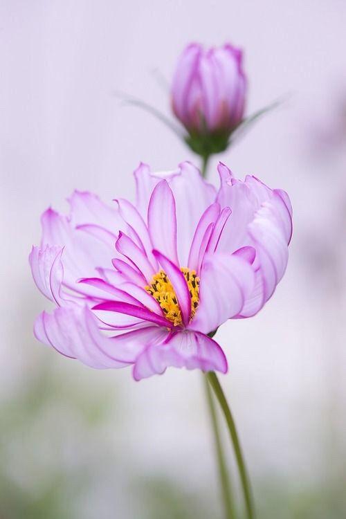 Yellowrose543 Purple Flower Melhores Flores Flores Exoticas
