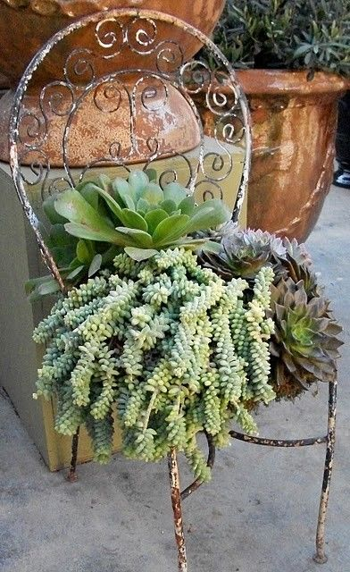 Old iron patio chair, turned into succulent planter