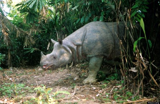 100 Most Threatened Species: Full List From The IUCN And ZSL via Huffington Post