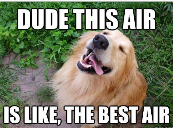 Image result for high dog meme