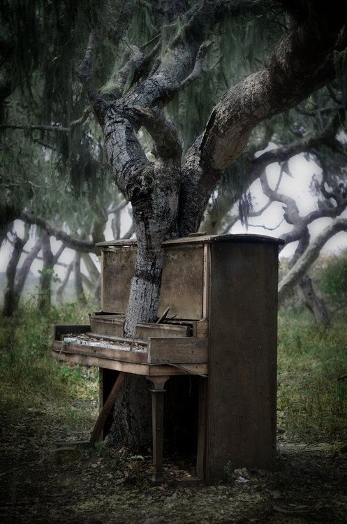 582 best pacific coast highway images on pinterest a bridge album the piano tree by sessa t i took this in monterey bay california i heard about it this piano that had a tree growing out of it on the csu monterey bay fandeluxe Image collections