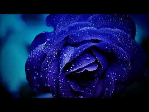 Inspirational Whatsapp Status Life Motivational Whatsapp Status Whatsapp Status On New Start Youtu Blue Roses Wallpaper Blue Rose Beautiful Rose Flowers