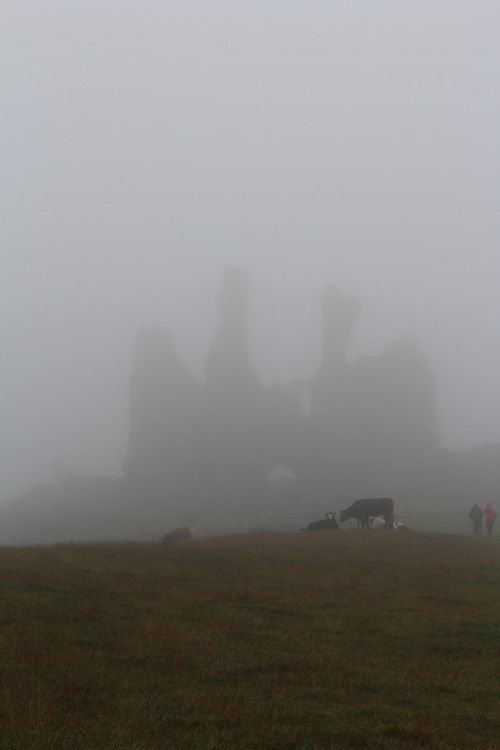nottheabsenceofviolence:Northumberland, England~ღஜღ~|cM
