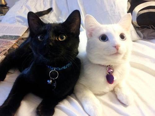 Black or white or both.