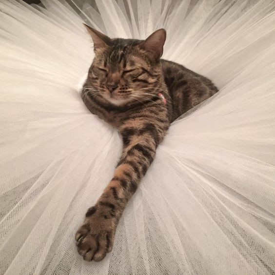 "NYC Dance Project ""capturing emotion through movement"" - The family cat in a tutu"
