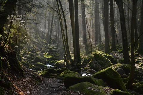 Mummelsee Lake, Baden Baden, Karlsruhe Palace, schluchsee, Cuckoo Forest,  Triberg Waterfalls, Black Forest, … | Black forest germany, Forest  landscape, Black forest