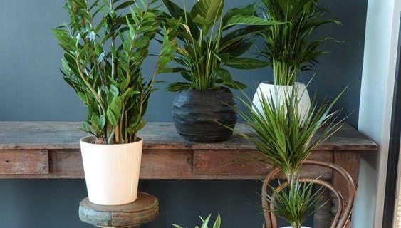 Ubertopfe Fur Zimmerpflanzen Zimmerpflanzen Pflanzen Und Pflanzenzubehor