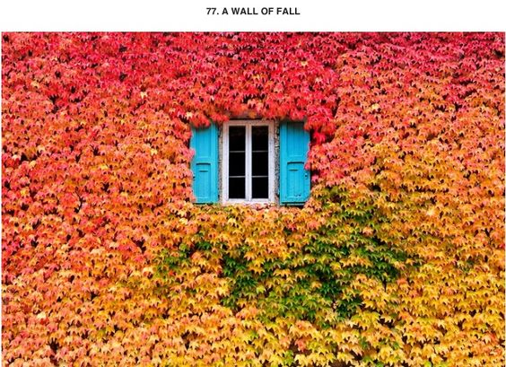 A Wall of Fall!