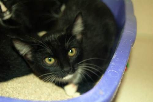 Cats & Kittens | MASON  petprojectfoundation.org