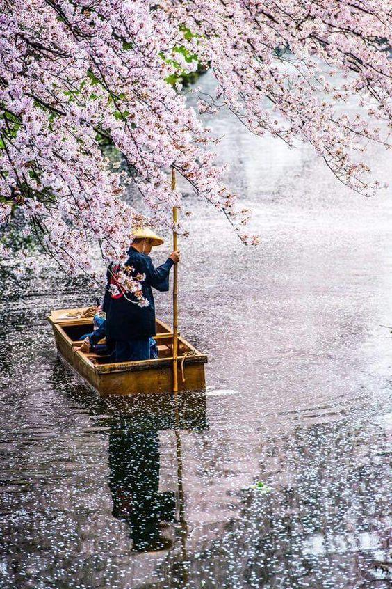 桜と渡し守の日本の景色の壁紙