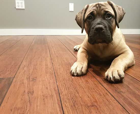 Best Pet Friendly Flooring Guide 2019 Flooring Eco Friendly
