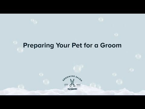 Your Local Dog Groomer Is As Close As Your Neighborhood Petsmart Academy Trained Safety Certified Pet Stylists Have 800 In 2020 Petsmart Petsmart Grooming Your Pet
