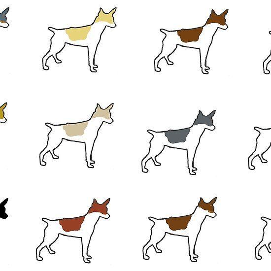 Rat Terrier All Colors Silhouettes Rat Terriers Dog Art Terrier