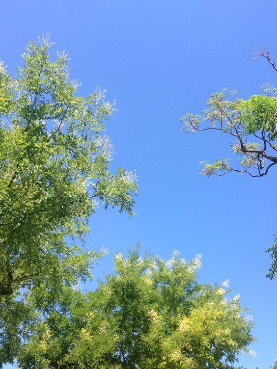 Helder blauwe lucht in de Provence!: