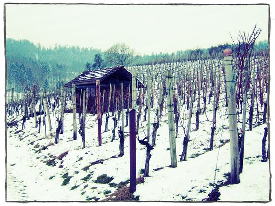 Auch der Winter hat seine Schönheit - Even the winter has its beauty #dorfwy #Wein #Wine #Vineyard #Winter